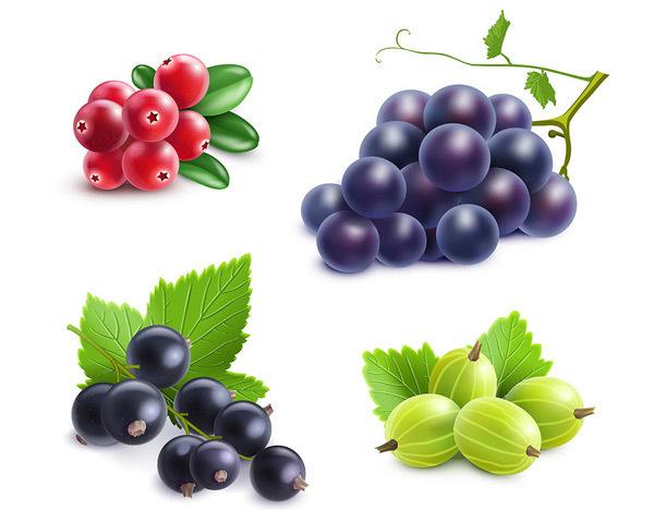 新鲜水果葡萄/枇杷/山楂矢量图下载