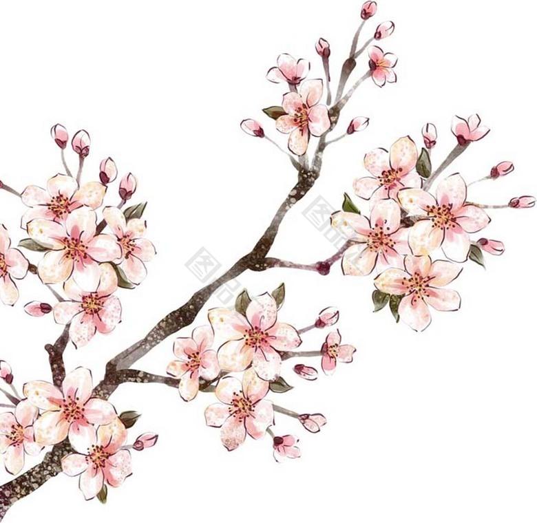 u624b u7ed8 u76db u5f00 u7684 u6843 u82b1 u7d20 u6750 u514d u6263 u514d u8d39 u4e0b u8f7d  u56fe u54c1 u6c47www 88tph com cherry blossom clip art black/white cherry blossoms clip art free